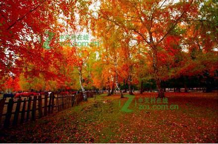 秋季风景拍摄技巧