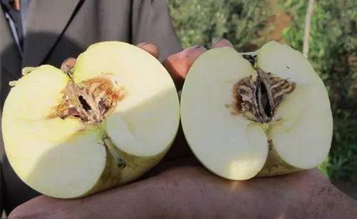 新买的苹果外表看起来好好的,为什么是黑心,里头烂黑了?