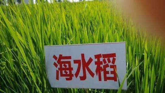 华为要种地搞农业是什么情况?