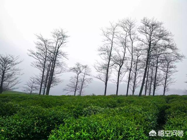 在农村如何用手机拍出好看的山水风景照片?