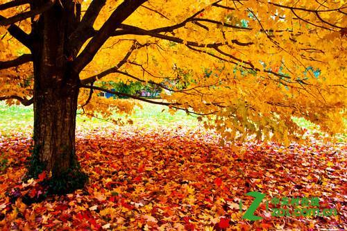 秋季景色如何拍摄